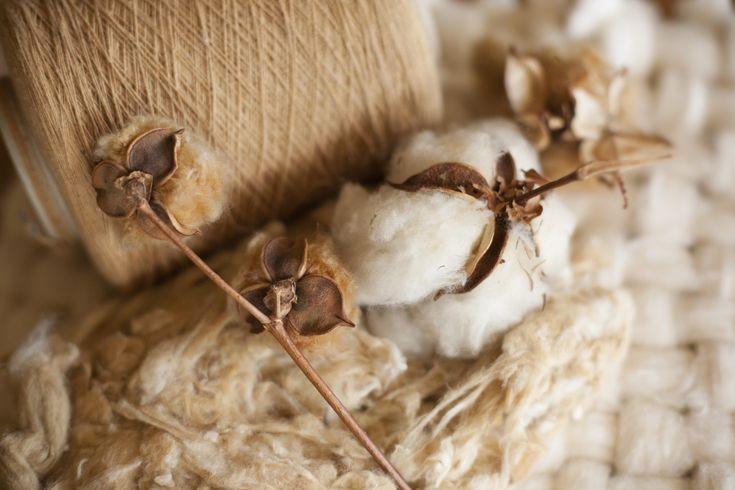 Organic Cotton Colours es una empresa pionera en la confección de todo tipo de productos de algodón de color en Europa. Han patrocinado eventos nacionales de moda sostenible como la Primera Pasarela de Moda Sostenible de Barcelona o la III Jornada de Moda Sostenible en el Museo del Traje de Madrid…