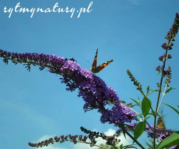 Motyle Plants Garden