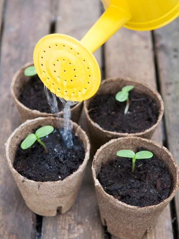 How to Grow Sunflowers and Other Flowering Annuals : Outdoors : Home & Garden Television