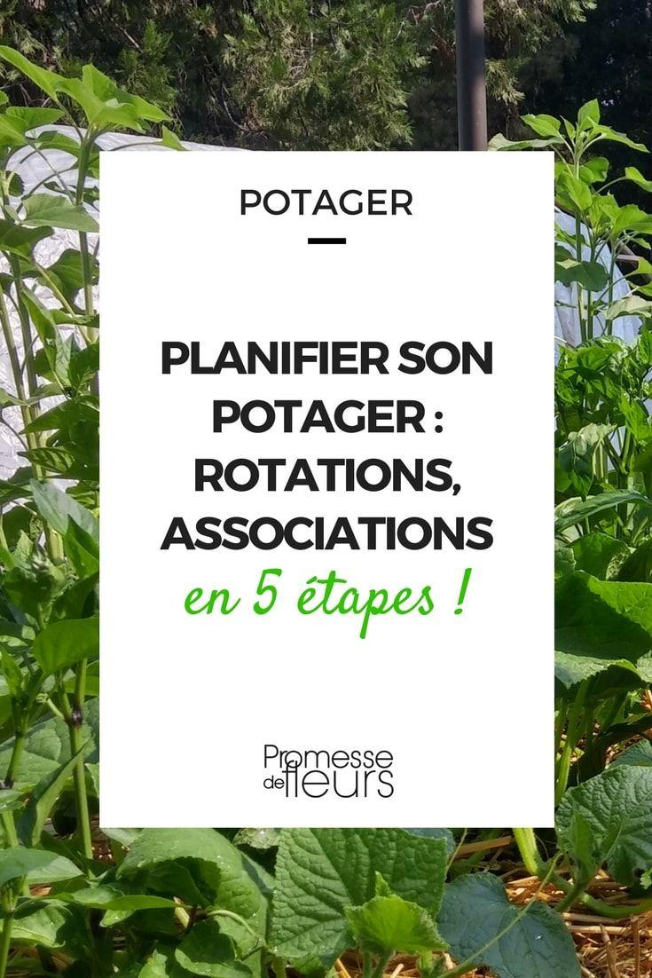 Planifier son potager : rotations et associations en 5 étapes