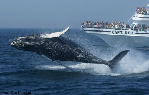 Cape Cod with kids from FamiliesGo! - whale watching