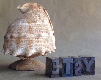 Seashell Pelican Bird Shell Art Sea shell by AmazingTreasureShop