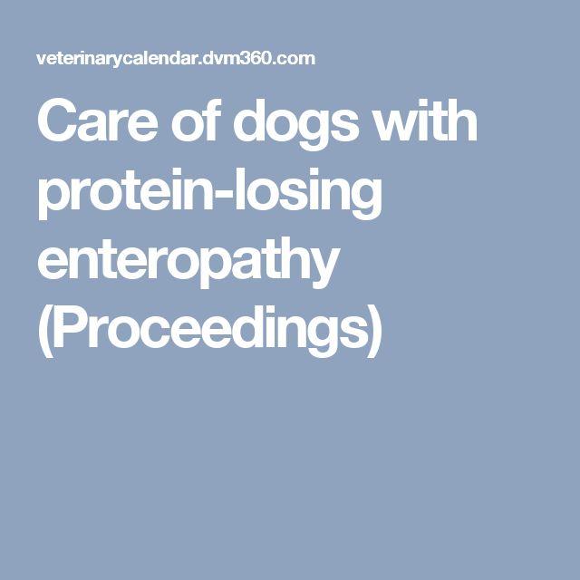 Protein Losing Enteropathy Best Dog Food