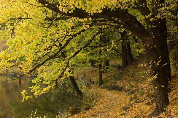 kyneton, botanic, gardens, autumn, campaspe river, path,
