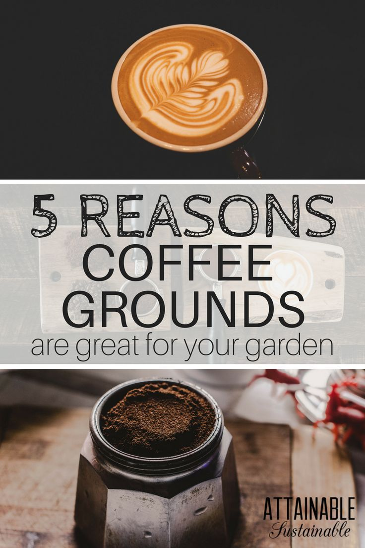11978 best homesteading self reliant living - Are coffee grounds good for your garden ...