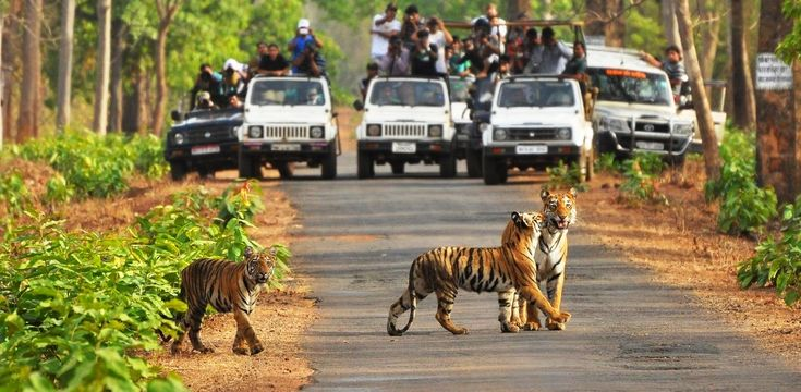 #Rajaji_National_Park also called Chilla national park, is an Indian national park that encompasses the Shivalik range near the foothills of the Garhwal #Himalayas. Rajaji National Park contains tropical and subtropical moist broadleaf dense and theek forests; Rajaji National Park is situated in #Uttarakhand State.
