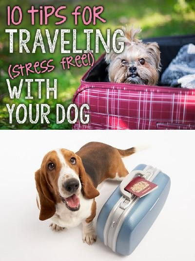 Hitting the open road with your pup in tow? Flying across the country with your best friend on board? Traveling with pets isn't quite as simple as getting them into the backseat and putting the car in drive, but with a little planning, a lot of preparation, you're sure to have the trip of a lifetime with your very best friend by your side! Read on as eBay shares ten tips to make traveling with your dog stress free.