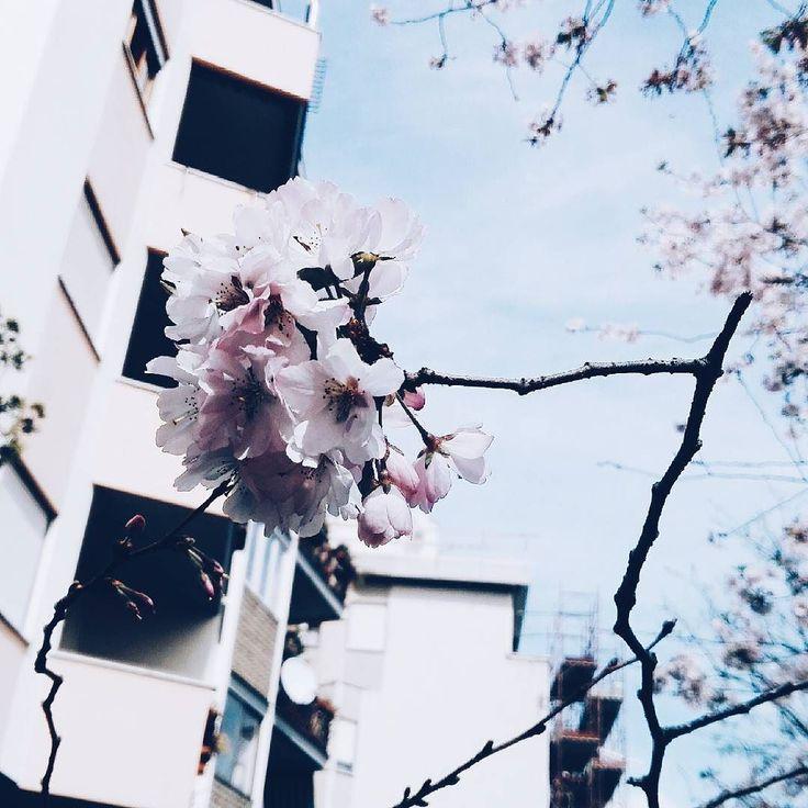 Spring perfume under my home  #flower #flowerstagram #spring #sun #sunnyday #sunny #Roma #rome #italy #italia #romantic #flowers #floweroftheday #nature #naturebeauty #landscape #ig_rome #ig_italia #ig_italy #ig_europe #vscocam #vsco #pink #picoftheday #igersoftheday #instamoment #instalike #instamood by francesca_depascalis