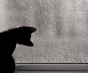 """Ebony likes to look out at the rain. I never really know why but I don't bother questioning it ever. The world is different when it rains."""