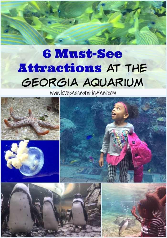 6 Must-see attractions at the Georgia Aquarium