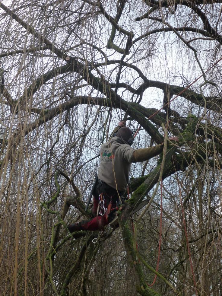 Abattage et lagage de vos arbres for Entretien jardin 41