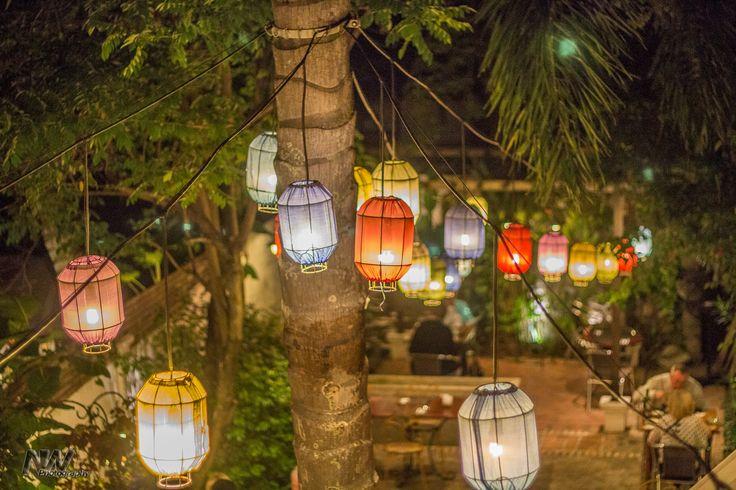 Coconut Garden, Luang Prabang, Laos