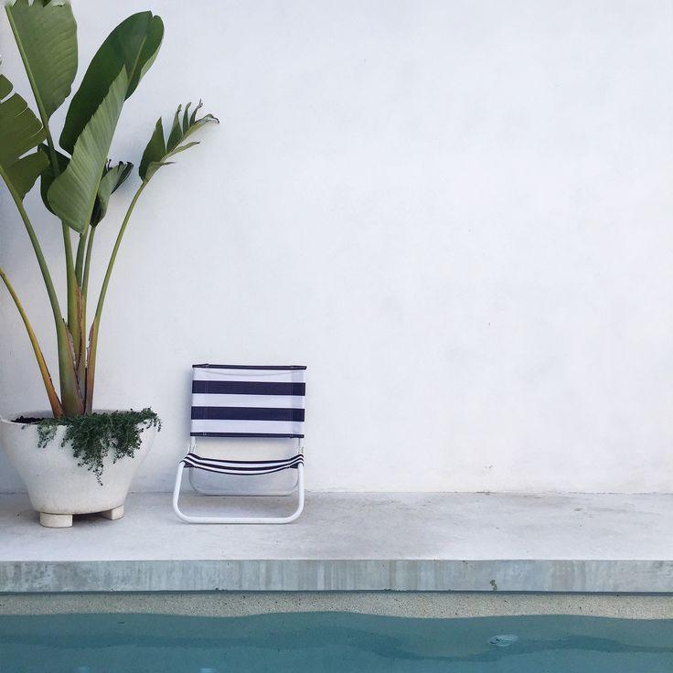 STRELITZIA | Slightly Garden Obsessed
