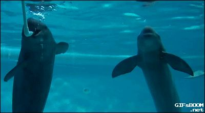 """catgifcentral: """"Dolphins passing bubble ring. """""""