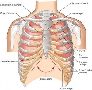 13 best rib pain images on pinterest | rib pain, ribs and health, Skeleton