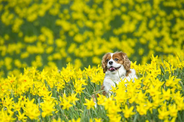 Molly the dog enjoys the fine spring weather in Thompson's Park, Cardiff, South Wales. Yesterday was the hottest day of the year with experts predicting continued warm weather throughout the week. (Photo by Matthew Horwood/Wales News Service)