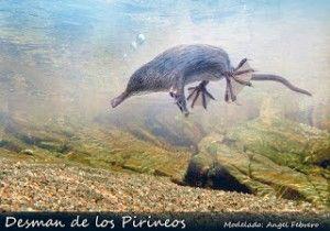 El Desman ibérico es el animal mas extraño de Europa, similar a la rata, al topo y a la musaraña.