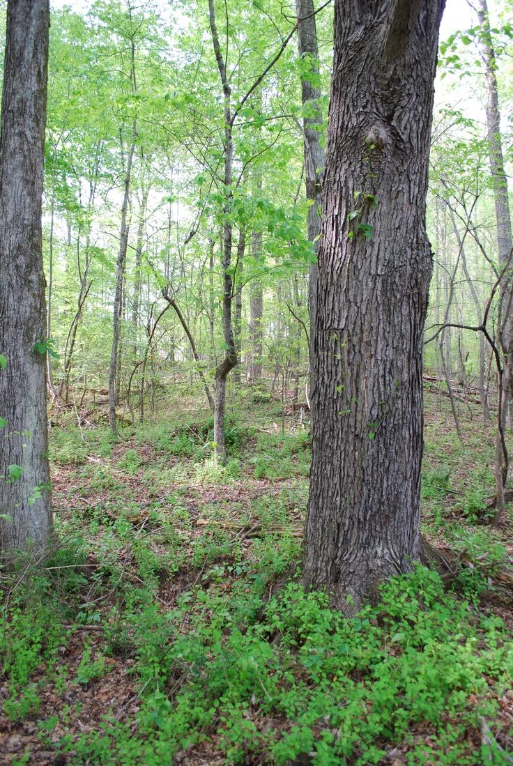 woodsWood, Backyards