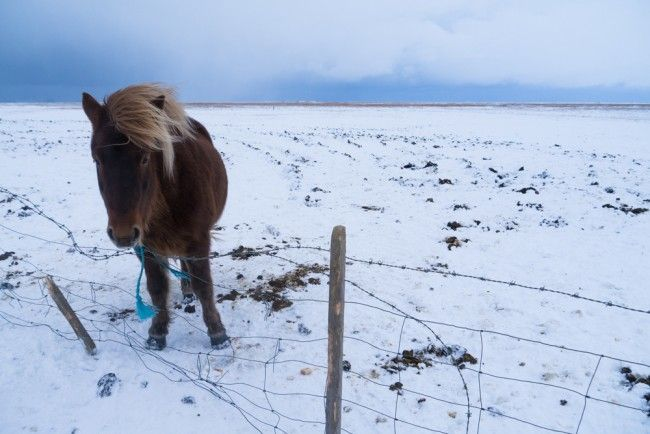 Everything you need to know about visiting Iceland in winter via Young…