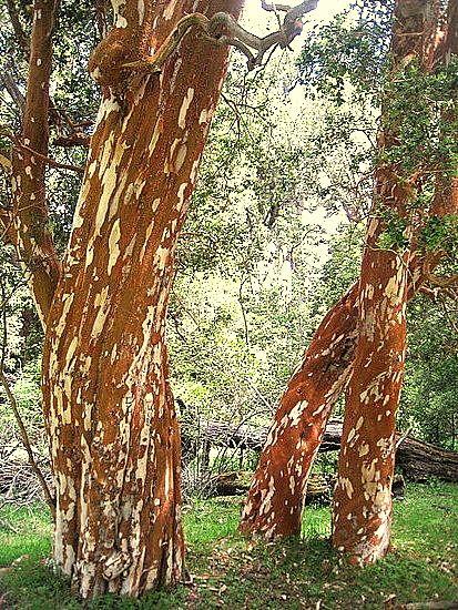 Excursión al Bosque de ArrayanesEl parque nacional Los Arrayanes es una reserva…
