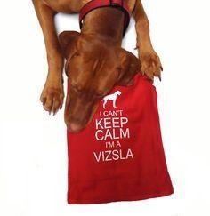 Vizsla Puppies Possess Above-Average Training Ability - #Vizslas #Puppies