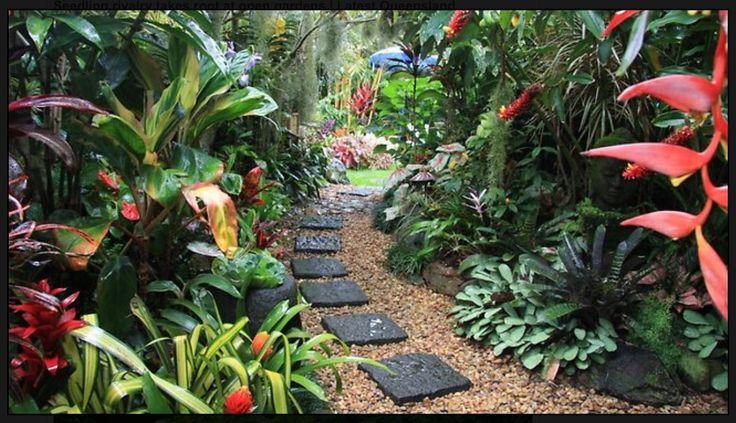 Rainforest feel for the garden