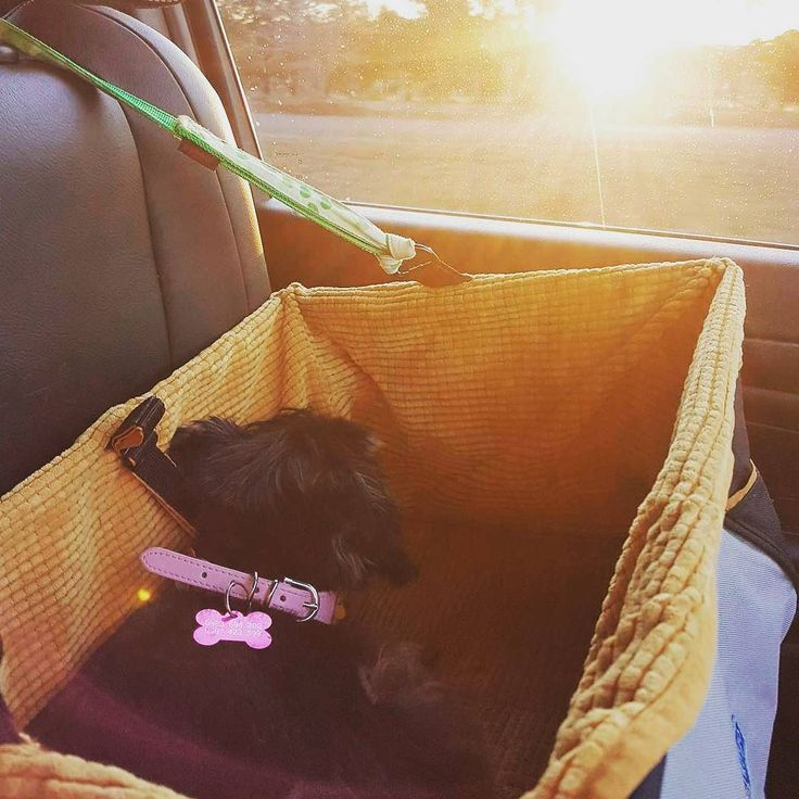 Ill be taking a little break over the next week Gene and Bronte will still be availble for anything last minute. Here's Jemima enjoying the car ride home tonight #jvrphoto #dogsofinstagram #photography