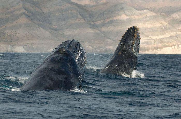 baleines-dauphins-christopher-swann-09