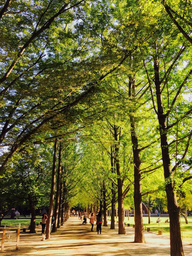 Naminara Republic, Korea / Sep 13, 2015 / #Korea #Nami #한국여행 #남이섬 #나미나라공화국 #나무 #tree #풍경 #산책