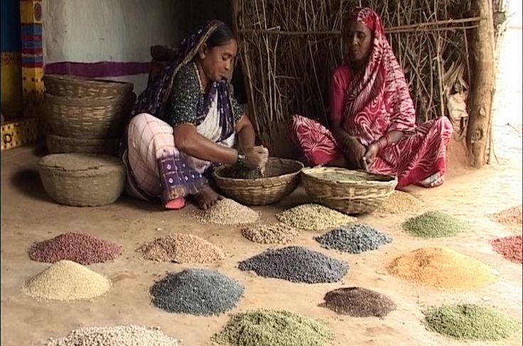 En Inde, la dissidence verte bouscule le système des castes !  L'Inde, géant asiatique, est l'un des pays les plus pollués de la planète. Mais il est aussi le laboratoire de mobilisations écologistes, comme celle de ces paysannes du Telangana, dans le centre du pays, qui ont choisi une agriculture bio, indépendante et collaborative.