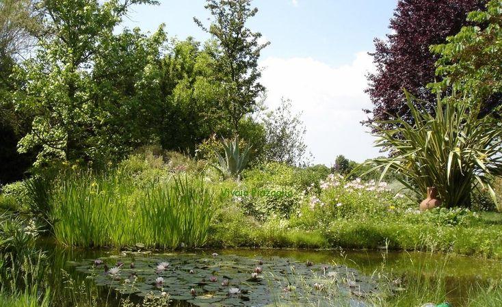 La parte soleggiata di un giardino sarà un posto ideale per sviluppare un bel laghetto con fioriture . Una zona semi ombreggiata con alberi sopra sara più suggestivo e offrirà un maggior senso di tranquillità Una zona ombreggiata è adatta…
