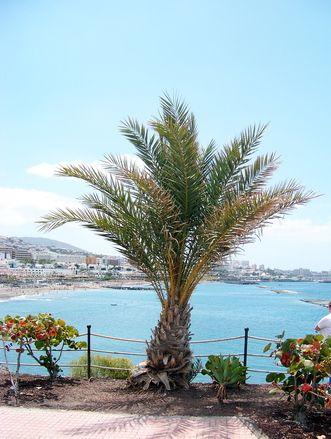 Teneryfa - na południu, gdzie jest znacznie cieplej, są rozmieszczone turystyczne kurorty. Sprawdź czym przyciągają tysiące turystów znane miejscówki?