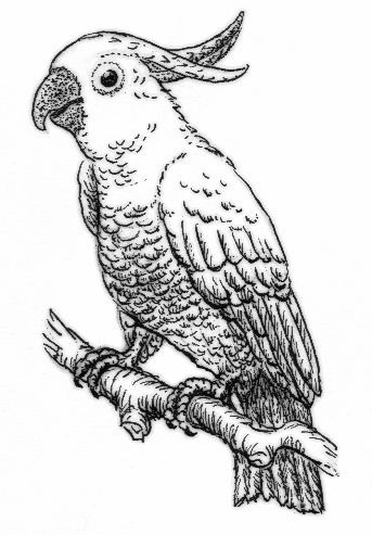 107 best Parrot coloring pages