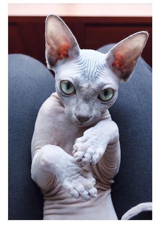 Amour de chat 😺 chats calin –      Chats et chatons- chaton mignon -bébé ch…