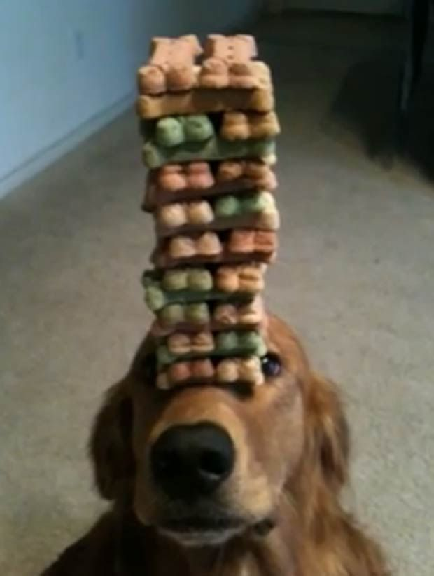 dog + dog biscuits