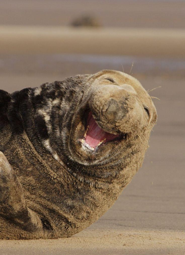 Animais felizes