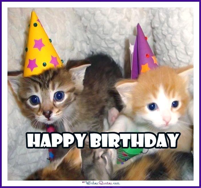 Birthday Meme with a Cat: Happy Birthday