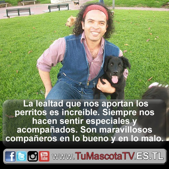 #perrosygatos #miperro #migato @silverpattym