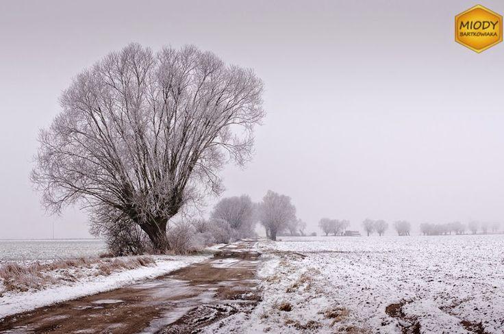 Droga Konarzewo-Palędzie obsadzona wierzbami głowiastymi. Aktualnie użytkowana jedynie przez maszyny rolnicze.