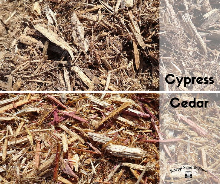 Cypress: Very bug and insect resistant, and it is an excellent matting mulch; meaning that it stays together very well after installation. Cedar: An excellent insect repellent due to natural oils found in the wood; it has a delightfully aromatic smell; and it decomposes quickly adding to the fertility of the soil.