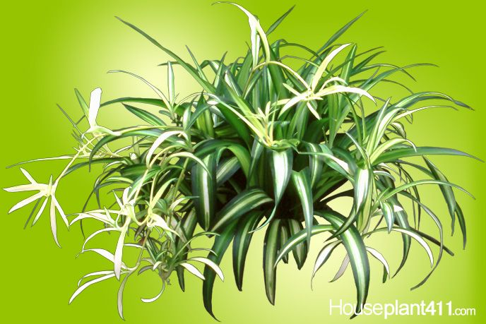 Avoid giving busy moms difficult poisonous houseplants for Are spider plants poisonous to cats