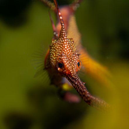 scuba - diving #scuba #snorkeling #diving #reefs #underwater