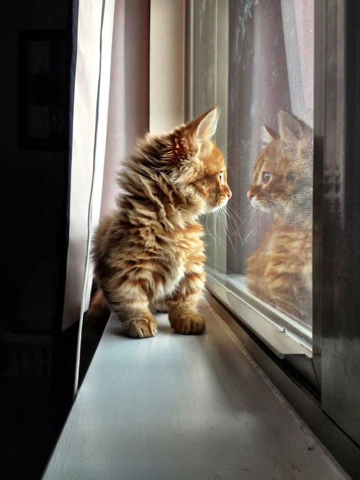 Sweet little cat eyeing up its dream day through the window.