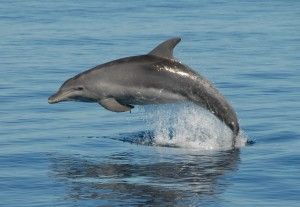 Dolphin tours Hervey Bay, Fraser Island, Queensland Australia