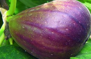 ¿Dolor de espalda? Prueba una cura de frutas deshidratadas para eliminarlos.