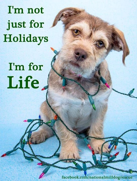 "Too many ""Christmas Furkids"" end up in shelters. Keep in mind a dog or any other furkid is a living, feeling being who needs care and love…they are NOT toys. This is a commitment for life! Don't let them down."