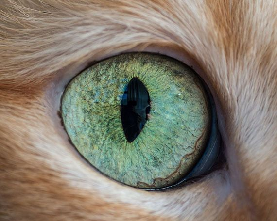 photo 15-Macro-Shots-of-Cat-Eyes14__880_zpsse0t0rq3.jpg