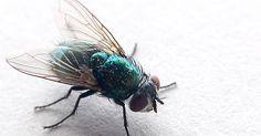 8 Mittel gegen Fliegen und 3 selbstgebaute Fliegenfallen                                                                                                                                                                                 Mehr