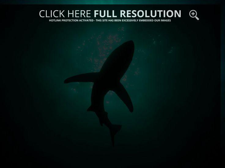 Shark Wallpaper - Deep Ocean Shark Wallpaper Gallery