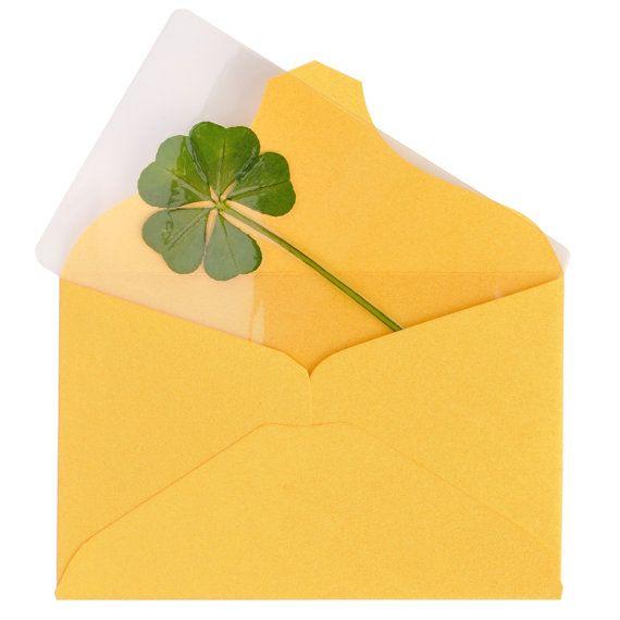 Genuine Real 5 Five-Leaf Clover Bookmarks Irish by ILoveKewpie